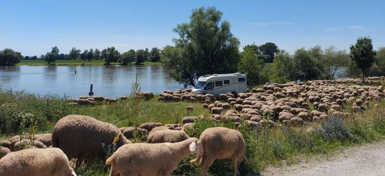 Freistehen mit Wohnmobil am See mit Schafherde
